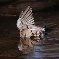 写真: 私の野鳥図鑑・090128なにしてんの?