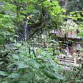 170929-99高尾山・6号路・びわ滝