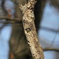 私の野鳥図鑑・130109コゲラの巣作り・巣の中の木屑処理
