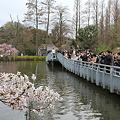 Photos: 100404-6井の頭公園