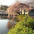 Photos: 100408-2井の頭公園