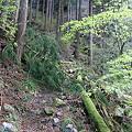写真: 100430-14御前山・道をふさぐ倒木