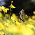 昭和記念公園 蝶