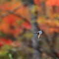 写真: 紅葉の森で