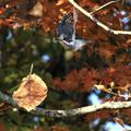 紅葉の森で