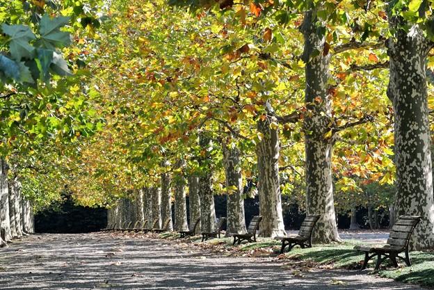 写真: 秋色の公園