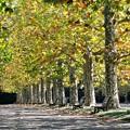 秋色の公園