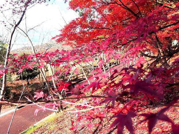 散歩道の紅葉・1