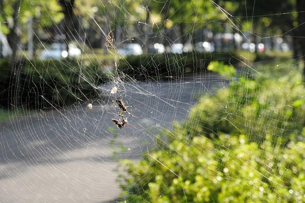 蜘蛛の巣_14927a