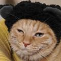 Photos: かぶり物 黒クマ