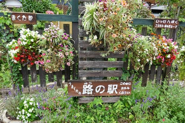 武田川コスモス・菜の花ロード@木更津P1000343