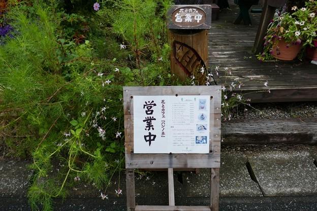 武田川コスモス・菜の花ロード@木更津P1000344