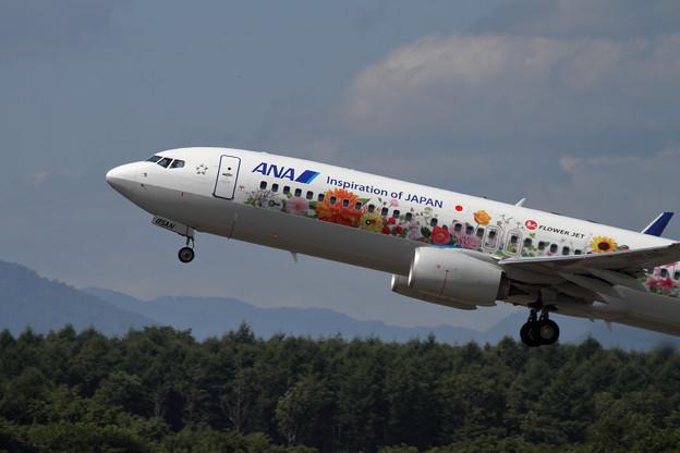 B737 Flower Jet ANA