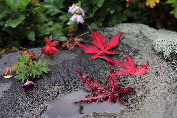 濡れ落ち葉 (1)