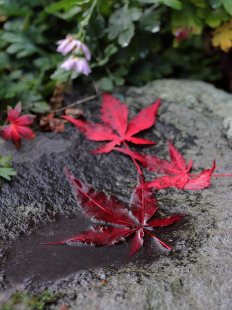 濡れ落ち葉 (2)