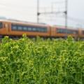 Photos: 菜の花畑で:ACE