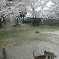 写真: 2012_04050064