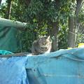 写真: 2013_02160030