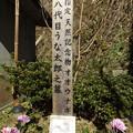 写真: うな太郎の墓