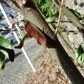 写真: 葉っぱのような? 2 (アカエグリバでした)