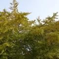 写真: DSC02528