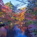 2017 金鱗湖の紅葉10