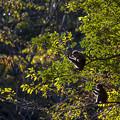 2017 高崎山の紅葉と猿6
