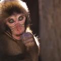 2017 高崎山の子猿2