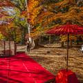 2017 富貴寺の紅葉3