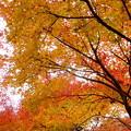 紅葉の小径