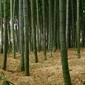 竹林の真骨頂