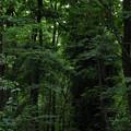 写真: 緑地銀座を征く