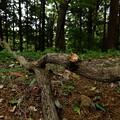 真横に伸びた枝