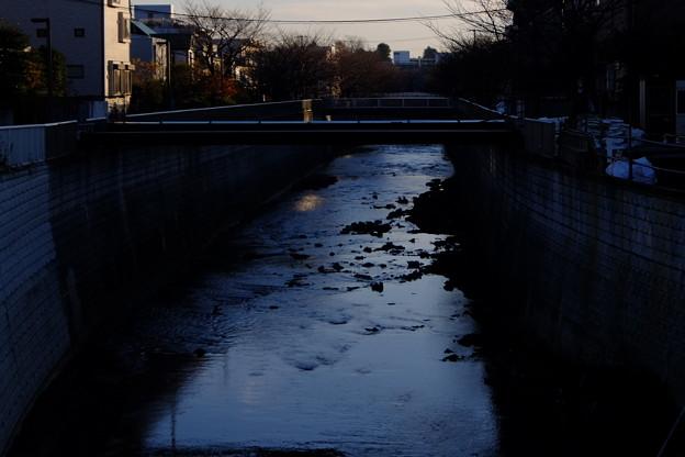 Photos: 蒼き石神井川