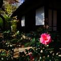 写真: 花咲くお庭