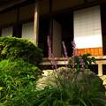 写真: ヤブランの庭