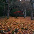写真: 森の奥でひっそりと