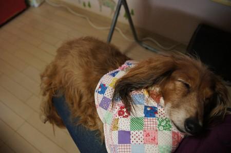 ブルーちゃんイボ切除手術で疲れちゃった