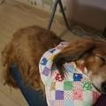 写真: ブルーちゃんイボ切除手術で疲れちゃった
