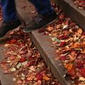 秋の帰り道