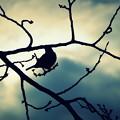 Photos: 小鳥の見る夢