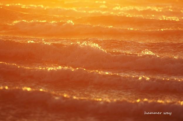 Photos: オレンジミルフィーユ
