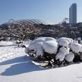 雪明けの水戸様公園