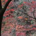 写真: 岐阜 養老の滝 151202 03