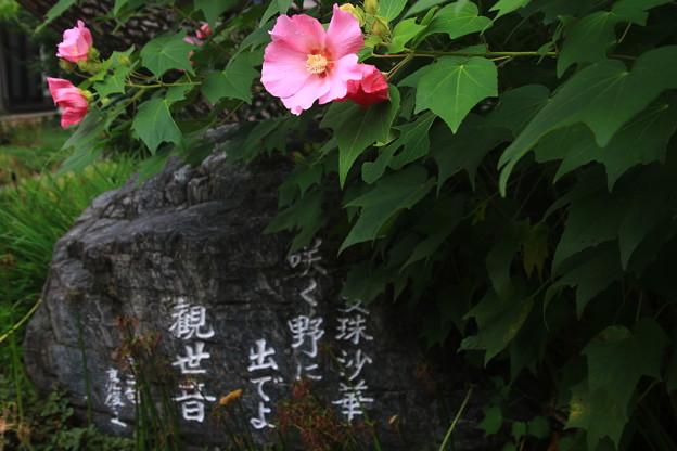 写真: 太田 常楽寺 170923 04