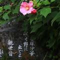 太田 常楽寺 170923 04