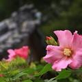 写真: 太田 常楽寺 170923 09