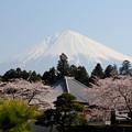 富士山 120409 02 富士宮大石寺から