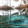 写真: 裏摩周 「神の子池」 130515 02