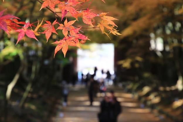 醍醐寺 171202 06